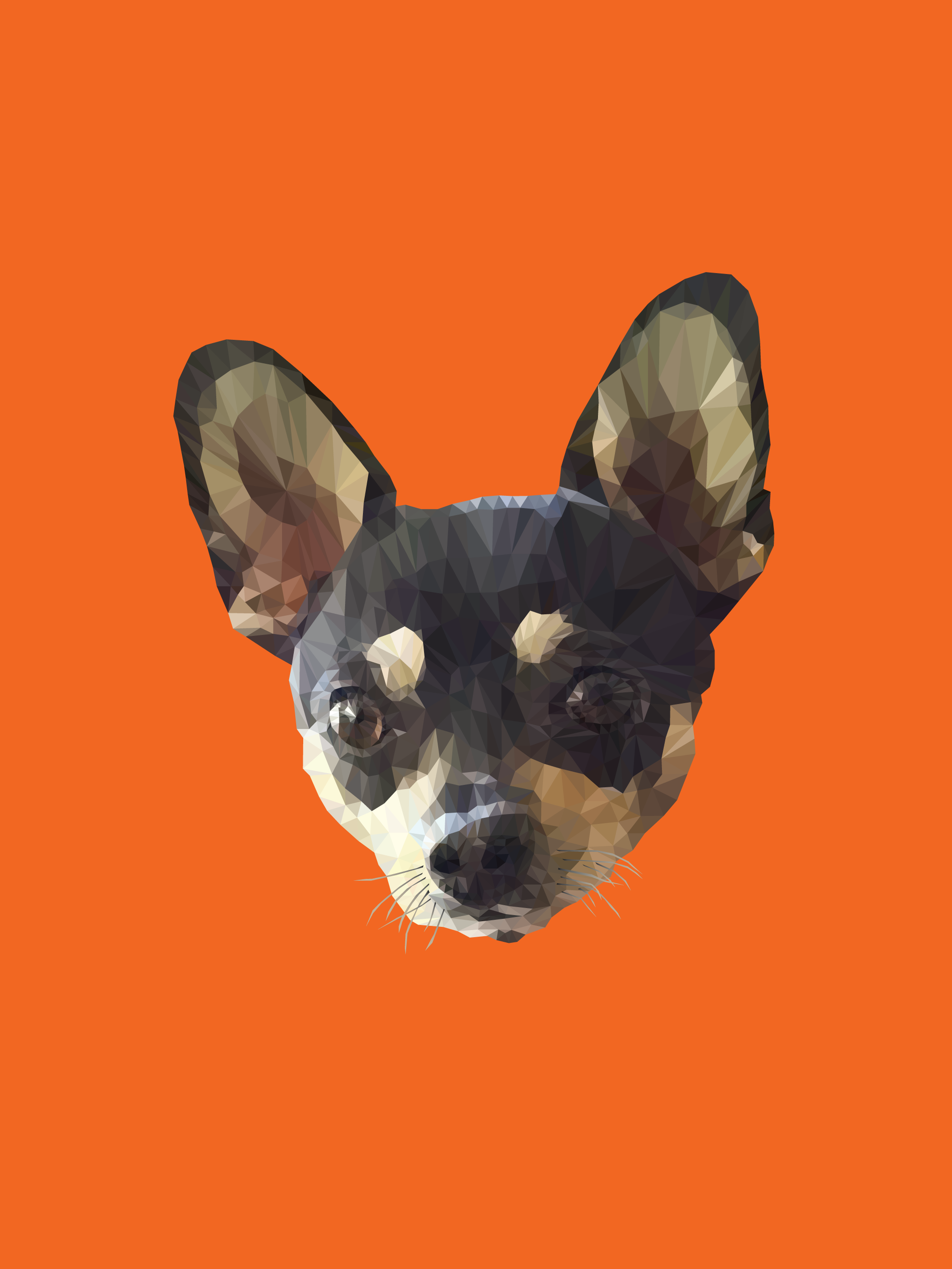 Low Poly Chihuahua illustration