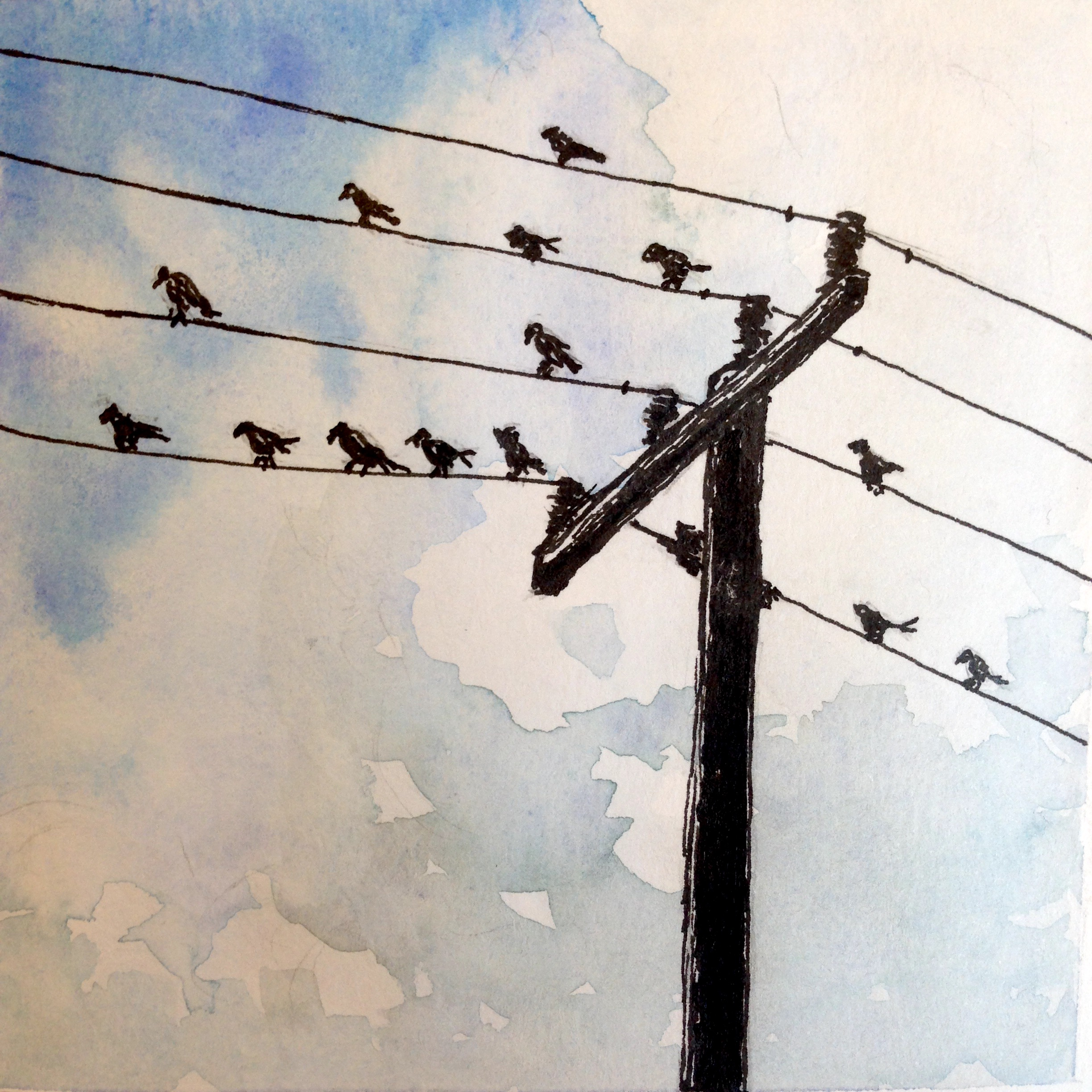 pen and watercolor of birds on a wire