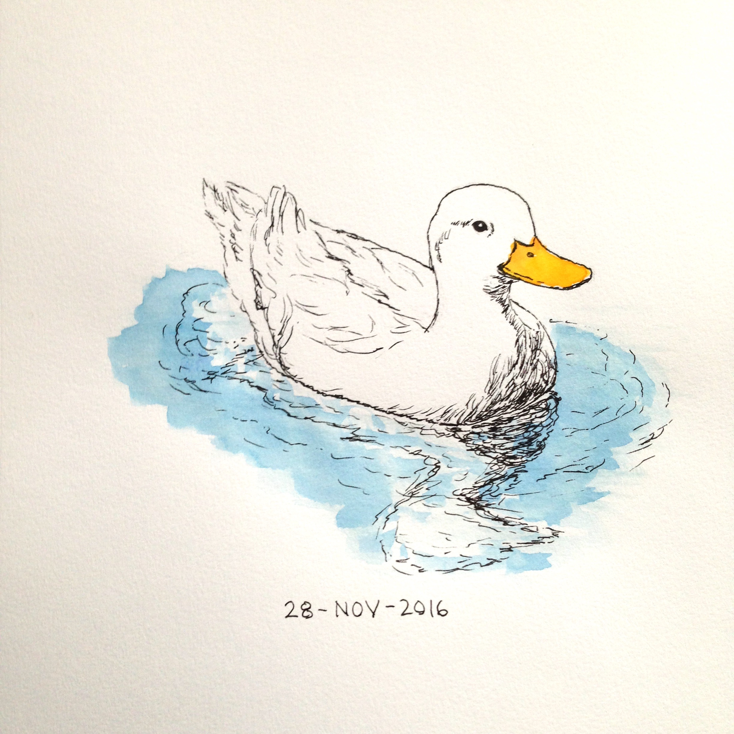 pen and watercolor duck drawing