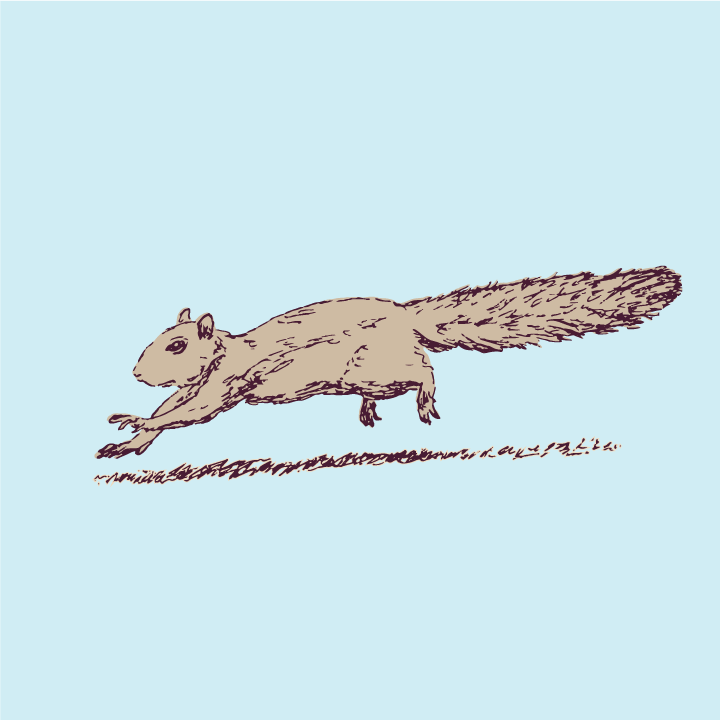 Drawing of a squirrel dashing across a lawn