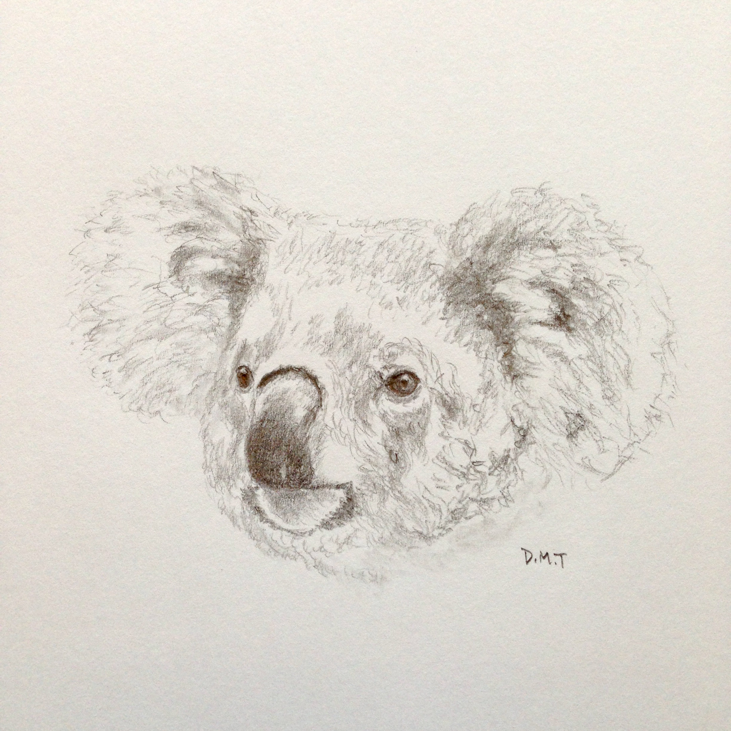 Pencil drawing of a koala