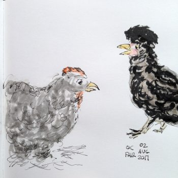 Drawing of chickens: Fluffy and Moptop