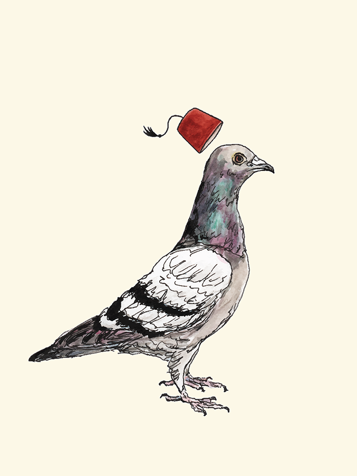 An unflappable pigeon wearing a fez