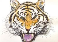 Drawing of a fierce Bengal tiger