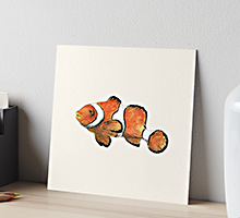 Redbubble clownfish art board