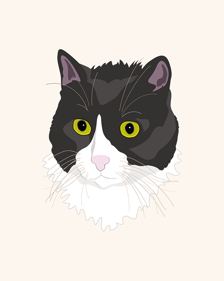 Casual Cat illustration
