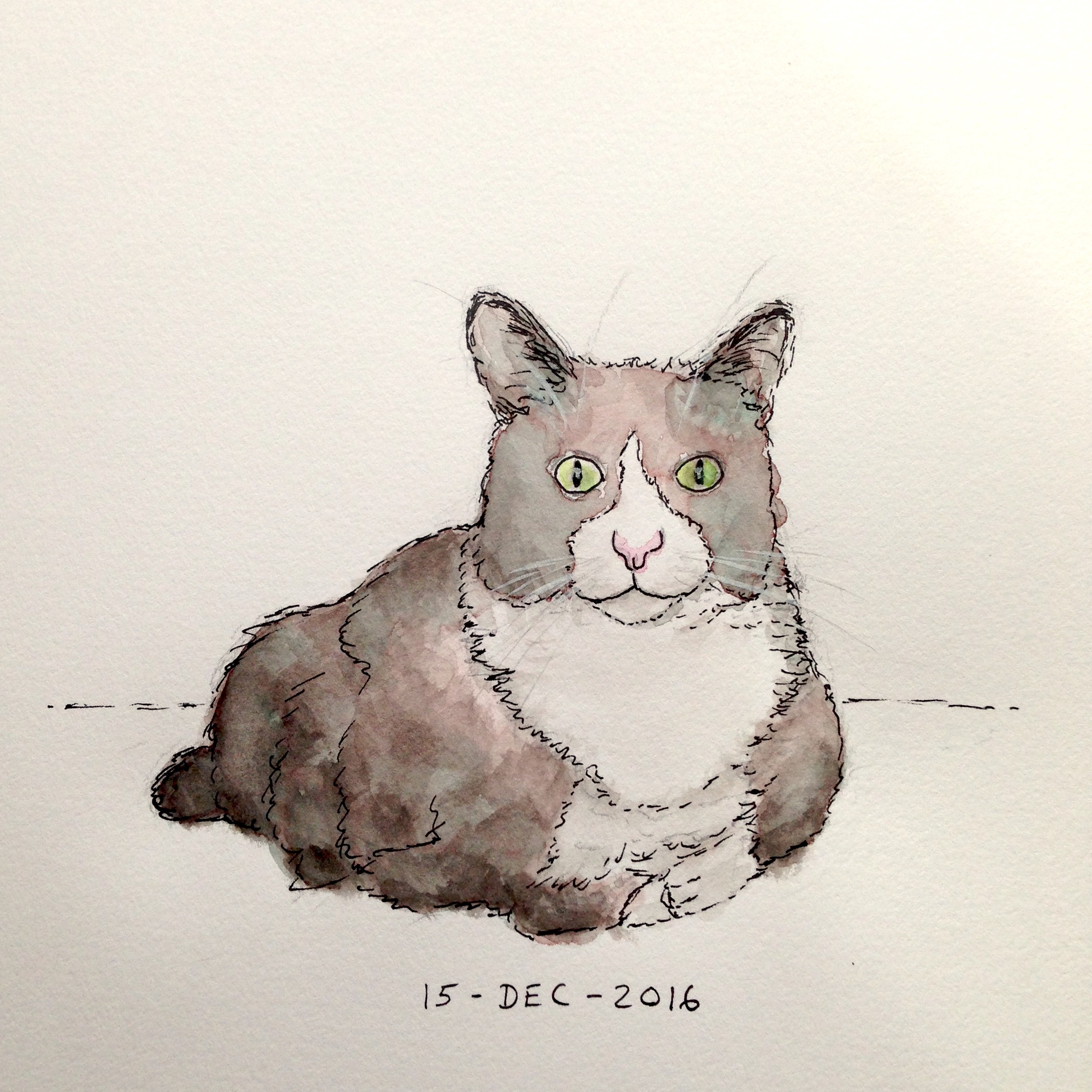 Pen and watercolor drawing of tuxedo cat, Kordell