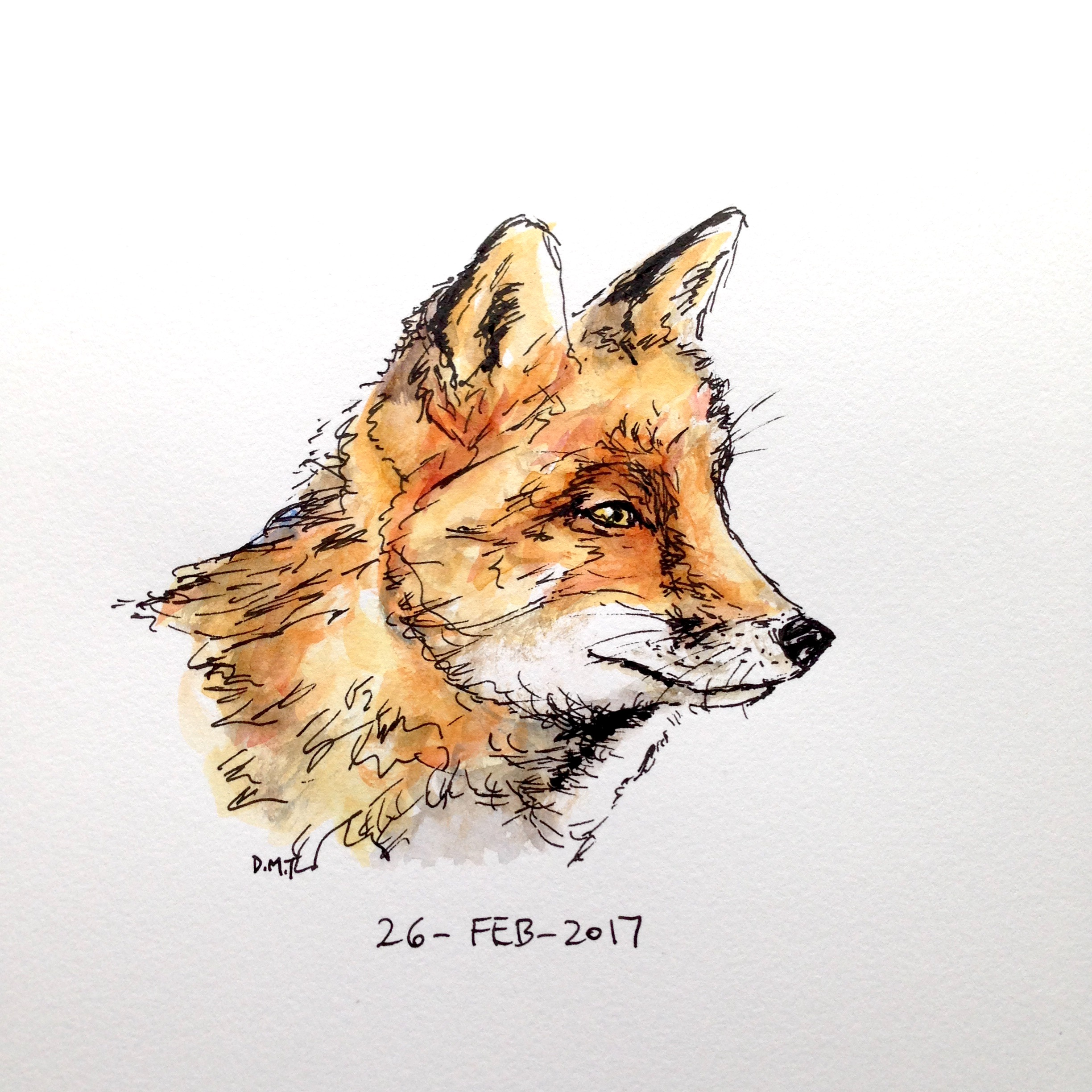 Pen and watercolor drawing of a fox