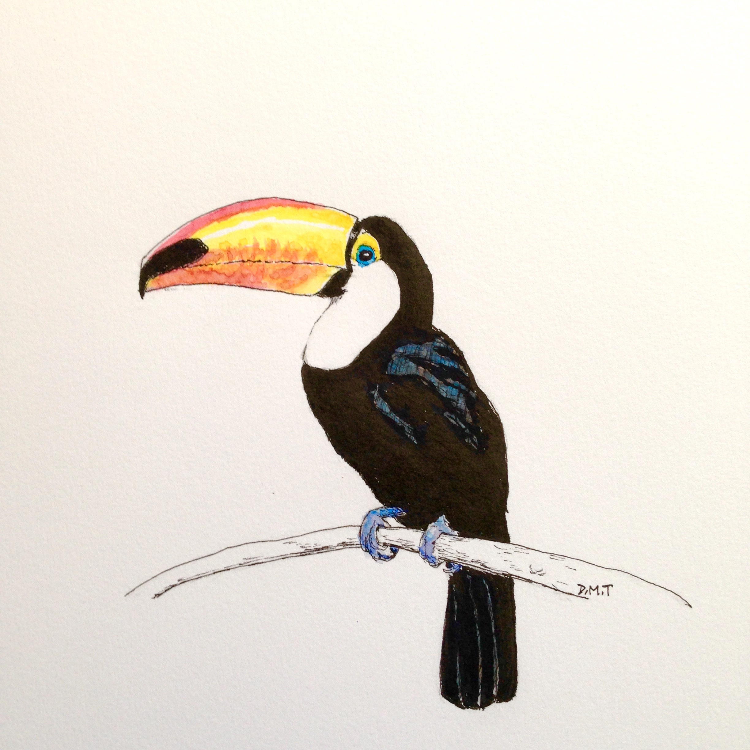Pen and watercolor drawing of a toucan