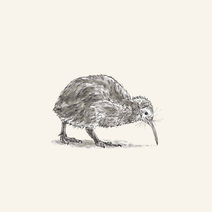 Pen and brush pen kiwi bird drawing