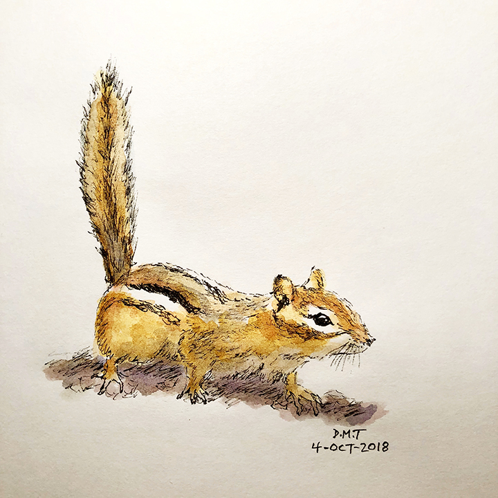 Pen and watercolor chipmunk drawing