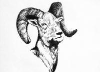 Inktober 2018, Day 16, Ram
