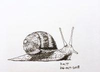 Inktober 2018, Day 26, Snail