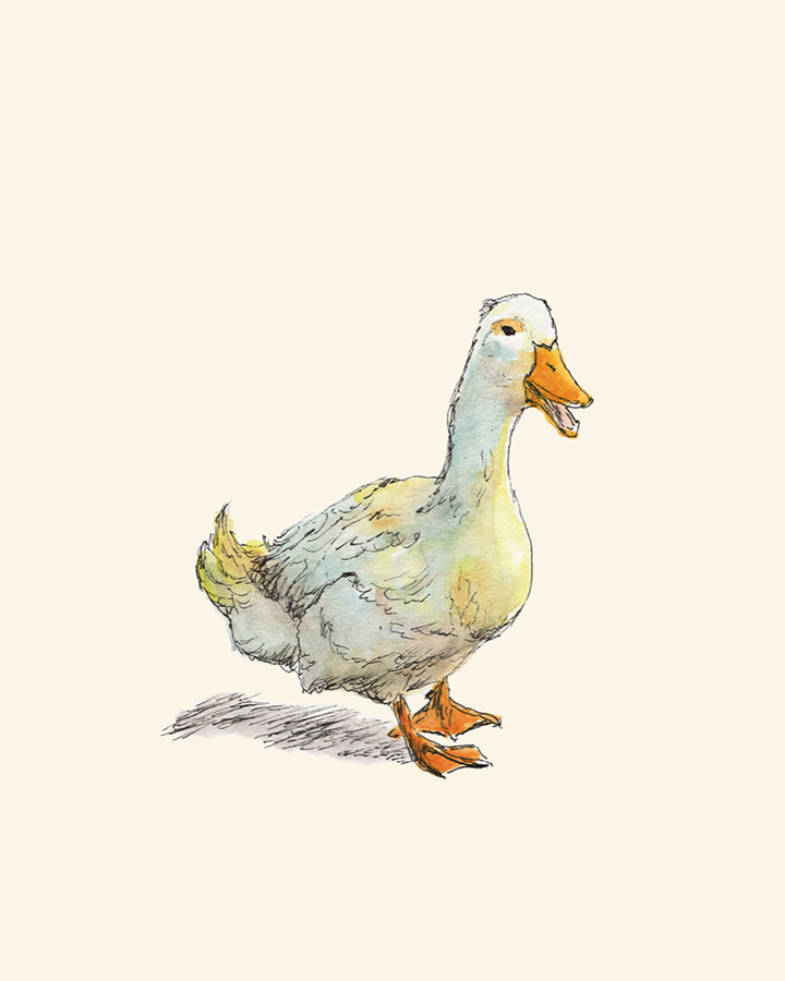 Waddle Duck pen and watercolor drawing