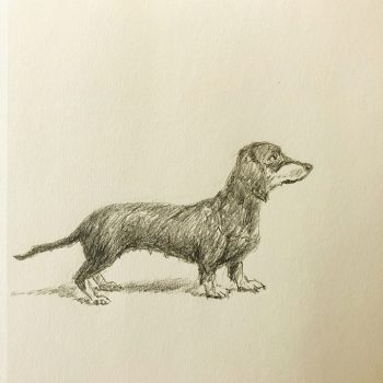 Dachshund - pencil drawing