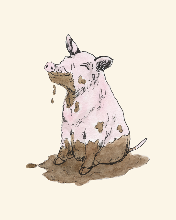 Pen and watercolor drawing of a filthy pig