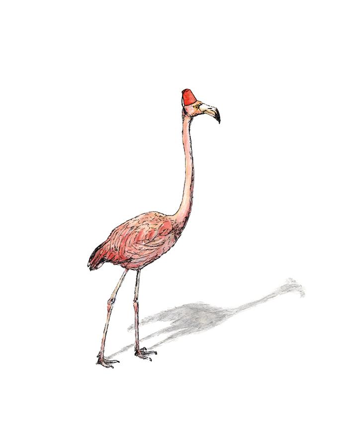 Fez hat flamingo drawing