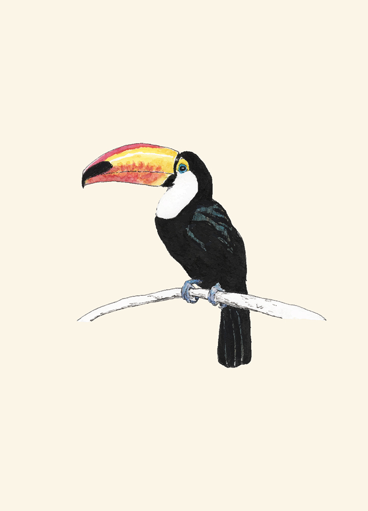 Pen and watercolor toucan drawing
