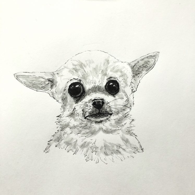 Pen and Ink Chihuahua